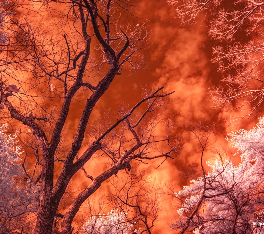 Infrared Sky Freetown State Forest