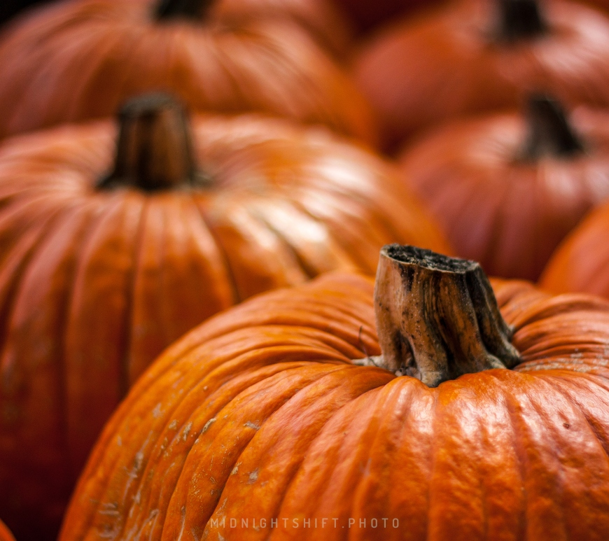 A pumpkin patch in Acushnet, Massachusetts